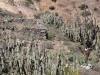 arequipa-colca-canyon-picks-61