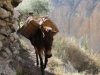 arequipa-colca-canyon-picks-65