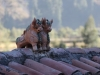 Machu-Picchu-picks-01